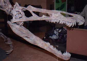 Image result for suchomimus skull
